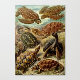 Sea Turtle Collage-Ernst Haeckel Canvas Print