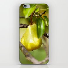 Country Living iPhone & iPod Skin