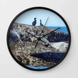 Seal pups, Seals  and Cormorants Wall Clock