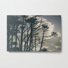 Pines 1 Metal Print
