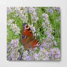 A Peacock Butterfly On A Laveder Bush Metal Print