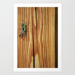 Grasshopper Art Print