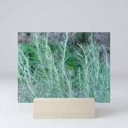 California Sage Mini Art Print