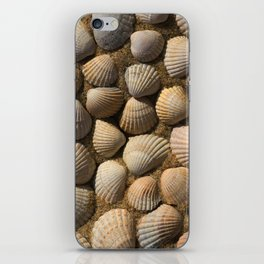 The World of Shells iPhone Skin