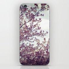 Morning Sky iPhone & iPod Skin