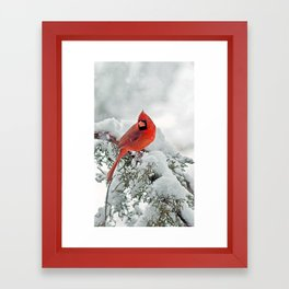 Cardinal on a Snowy Branch Framed Art Print