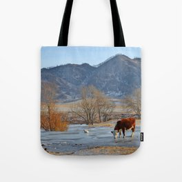 Cow drinking from a mountain stream from under ice in winter Tote Bag