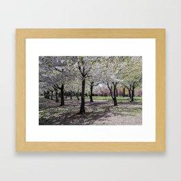Spring at Flushing Park, Queens Framed Art Print