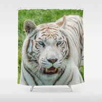 tigers Shower Curtains featuring THE BEAUTY OF WHITE TIGERS by Catspaws
