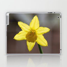 Daffodil II Laptop & iPad Skin