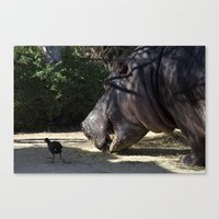 vegetarian Canvas Prints featuring Hippo Vegetarian by GPNaturePhotos