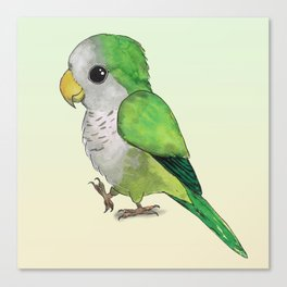 Very cute parrot Canvas Print