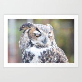 Great Horned Owl 2 Art Print