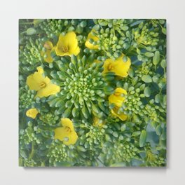 budding brassicas Metal Print
