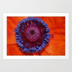 Poppy Burst Art Print