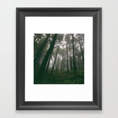 Looking Up Into The Fog Framed Art Print