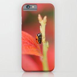 Ladybug On An Autumn Leaf iPhone Case