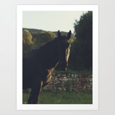 Black Stallion photo, big horse male under the italian sunset, high quality photography, hasselblad Art Print