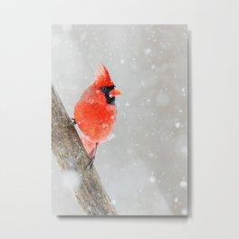 Male Northern Cardinal Metal Print