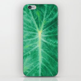 Colocasia Esculenta iPhone Skin