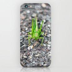 Grashopper iPhone 6s Slim Case
