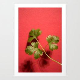 Parsley on Red Art Print