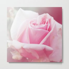 *Pinklight - Rose II Metal Print