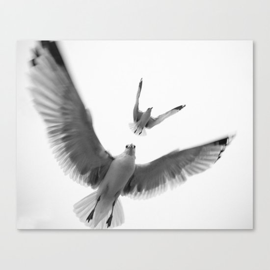 Seaguls {Eight} Canvas Print