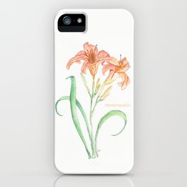 Hemerocallis (Day Lily) iPhone Case