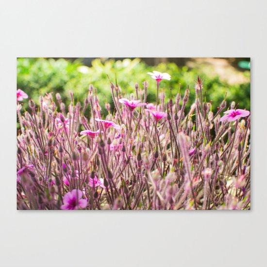 fleurs des champs 5 Canvas Print