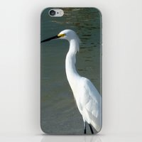 crane iPhone & iPod Skins featuring Crane by Rachel Garrity