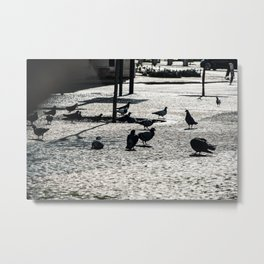 Pigeon lunch time Metal Print