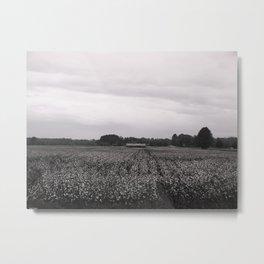 Cotton Field Metal Print