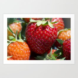 Fresh Ripe Strawberries in the Sun Art Print