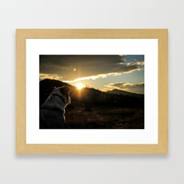 Canine Sunset Framed Art Print