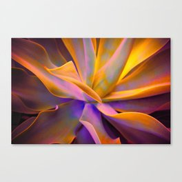 Dreaming in Agave Canvas Print