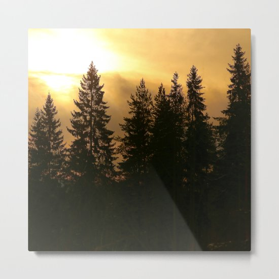 Forest At Morning  Metal Print