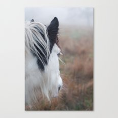 Profile of a Black and White Horse Canvas Print