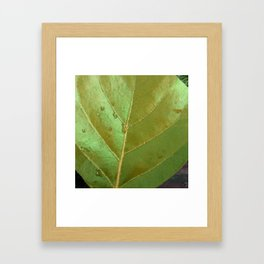 Sea Grape Leaf Framed Art Print