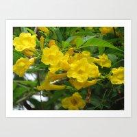 Flower yellow elder Art Print