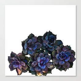 Succulents IIII Canvas Print