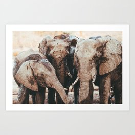 African Elephants Art Print || Botswana, Chobe National Park Art Print