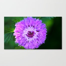 PAPOW! Purple Macro Flower Canvas Print