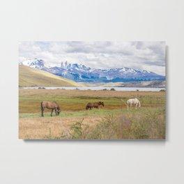 Torres del Paine - Wild Horses Metal Print