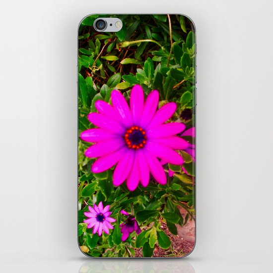 STRIKING GREENISH FUCCI iPhone & iPod Skin