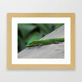 Relaxing Gecko Framed Art Print