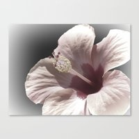 hibiscus Canvas Prints featuring Hibiscus by Lynn Bolt