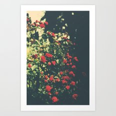 Summer Roses Series  - I -   Art Print