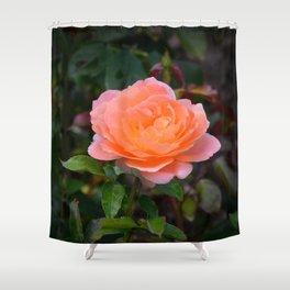 Peach Rose by Teresa Thompson Shower Curtain
