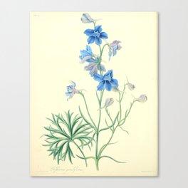 175. Roscoe, Margaret (1786-1840) - Floral Illustrations of the Seasons 1831 - Delphinium Grandiflor Canvas Print